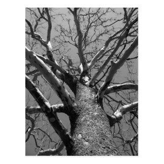 不毛の木 ポストカード