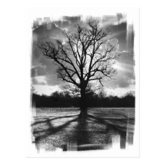 不毛の枝木 ポストカード