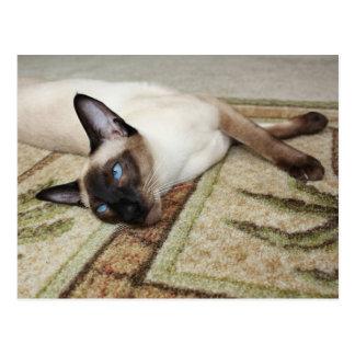 不精なシャム猫 ポストカード