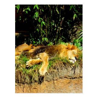 不精なライオン 葉書き