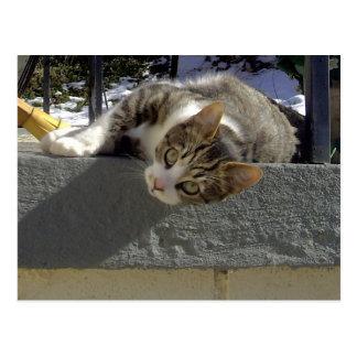 不精な子猫 ポストカード