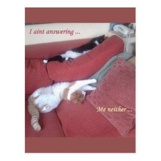 不精な猫のおもしろいの郵便はがき-居眠り ポストカード