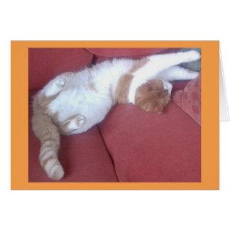 不精な猫1の写真カード グリーティングカード