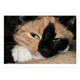不精な猫 はがき