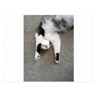 不精な猫 ポストカード