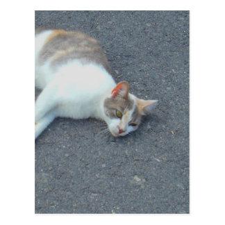 不精な通りの昼寝の子猫 ポストカード