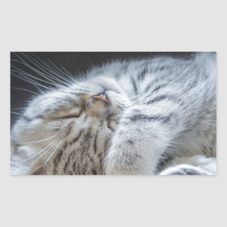 不精な黒い銀製に虎猫の子ネコのあること 長方形シール