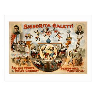 世界で最も素晴らしい実行猿1892年 ポストカード