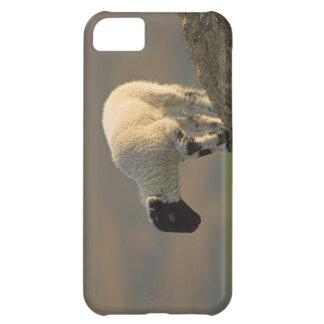 丘の頂上のiPhone 5の穹窖でやっと子を産んで下さい iPhone5Cケース