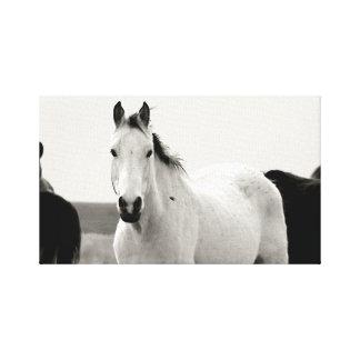 丘の馬 キャンバスプリント