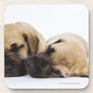 並んで眠っているグレートデーンの子犬 コースター
