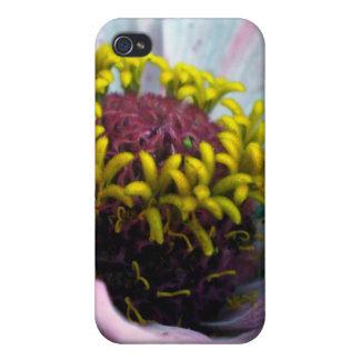中ピンクの《植物》百日草の開花 iPhone 4/4Sケース
