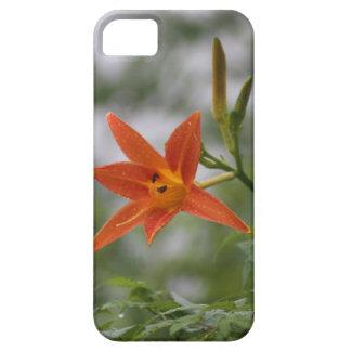 中国のなオニユリの芽及び開花の花 iPhone SE/5/5s ケース