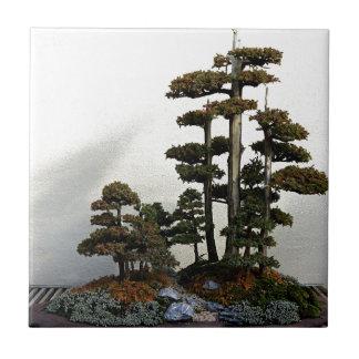 中国のな杜松の盆栽の木 タイル