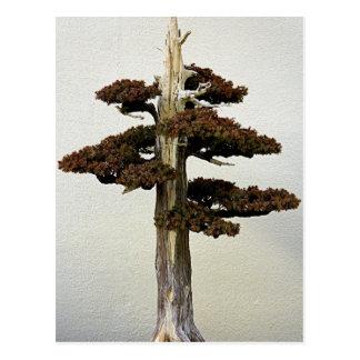 中国のな杜松の盆栽の木 ポストカード