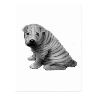 中国語SHAR-PEI: 鉛筆の現実主義: 犬 ポストカード