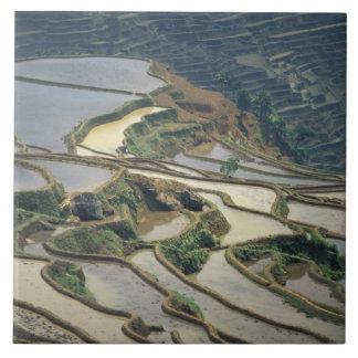 中国、雲南省。 あふれられた米台地の タイル