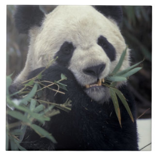 中国、WolongのSIZEN HOGO。 ジャイアントパンダの供給 タイル