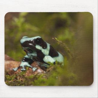 中央PA、米国のAuratusの投げ矢のカエル; 別名緑 マウスパッド