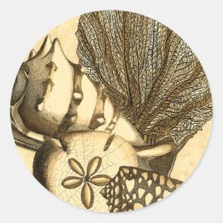 中立貝および珊瑚のコレクション ラウンドシール