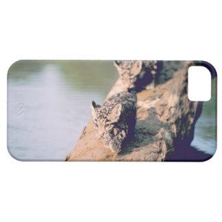 丸太のヒョウの幼いこども iPhone SE/5/5s ケース