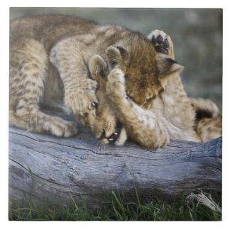 丸太、ヒョウ属レオ、マサイ語で遊んでいるライオンの子 タイル