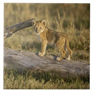 丸太、ヒョウ属レオ、マサイ語マラ、ケニヤのライオンの子 タイル