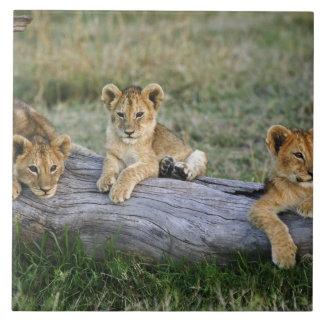 丸太、ヒョウ属レオ、マサイ語マラ、2のライオンの子 タイル