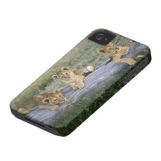 丸太、ヒョウ属レオ、マサイ語マラ、2のライオンの子 Case-Mate iPhone 4 ケース
