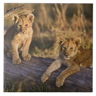丸太、ヒョウ属レオ、マサイ語マラ、3のライオンの子 タイル