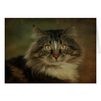 主要なあらいぐま猫Notecard カード