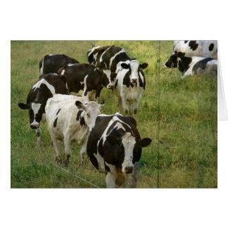 乳牛 カード