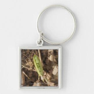 乾燥されたエンドウ豆の鞘の植物のグリーンピースのポッド キーホルダー