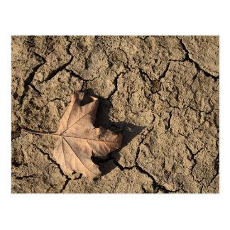 乾燥した汚れた土-秋の写真撮影の死んだ葉 ポストカード