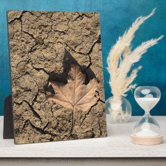 乾燥した汚れた土-秋の写真撮影の死んだ葉 表示プリントプレート
