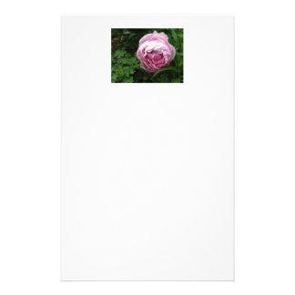 二重ピンクのシャクヤク-写真 便箋