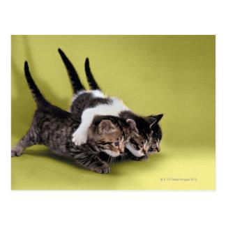 互いを抱き締めている3匹の子ネコ ポストカード