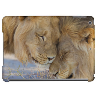 互いを摩擦している2頭のライオン iPad AIRケース