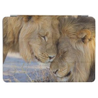 互いを摩擦している2頭のライオン iPad AIR カバー