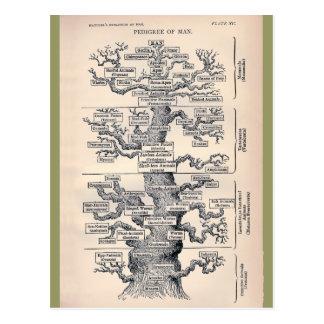 人の/系統生命の樹 ポストカード