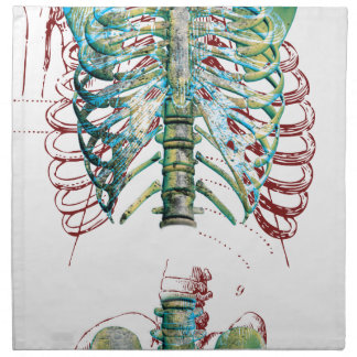 人体の胸郭 ナプキンクロス