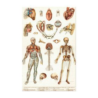 人体の解剖学 キャンバスプリント