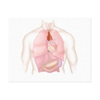 人間の呼吸および消化系 キャンバスプリント