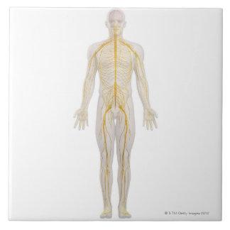 人間の神経系2 タイル