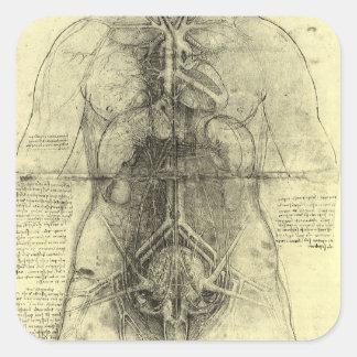 人間の解剖学、レオナルド・ダ・ヴィンチ著女性の胴 スクエアシール