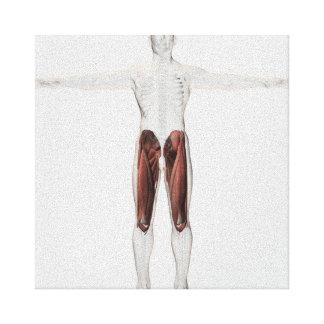 人間の足、前方の4の男性筋肉解剖学 キャンバスプリント
