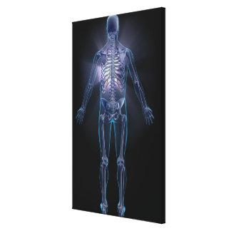 人間の骨組の背部眺め キャンバスプリント