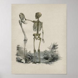 人間の骨組解剖学のヴィンテージのプリント ポスター