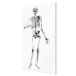 人間の骨組 キャンバスプリント