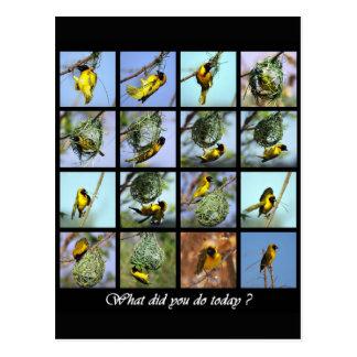 今日何が-鳥および巣 ポストカード